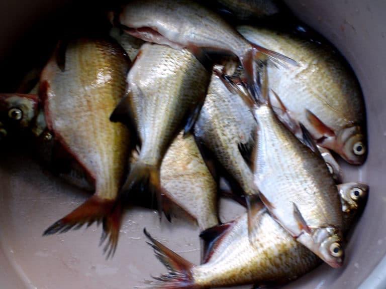 ограничения на рыбалку в самарской области