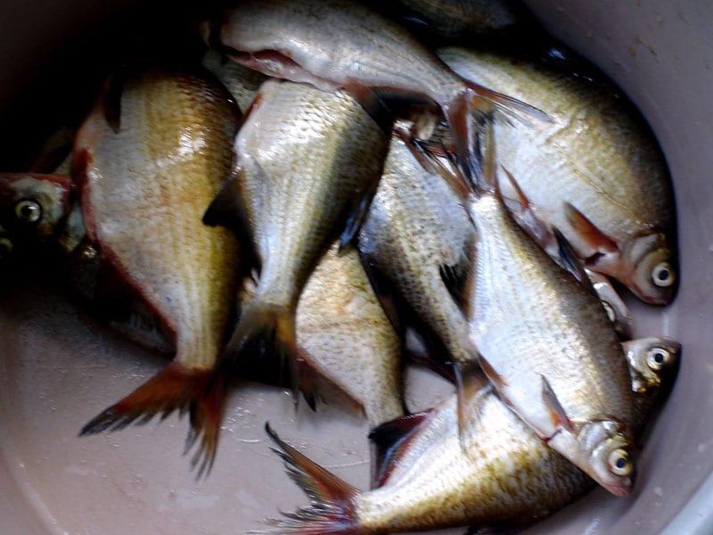 штрафы за рыбалку в нерест самарской области